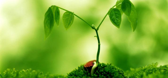 Nurturing Relationship with Consciousness